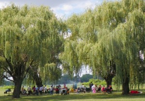 Group picnics beneath willows on Belle Isle July 29, 2012.