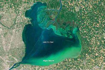 Lake Erie's algae bloom has grown to alarming portions since last year. Note origin at bottom from Detroit.