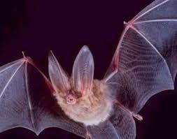 Bat (resembles Judge Rhodes a little bit)